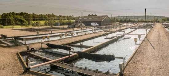 Nymølle Dambrug